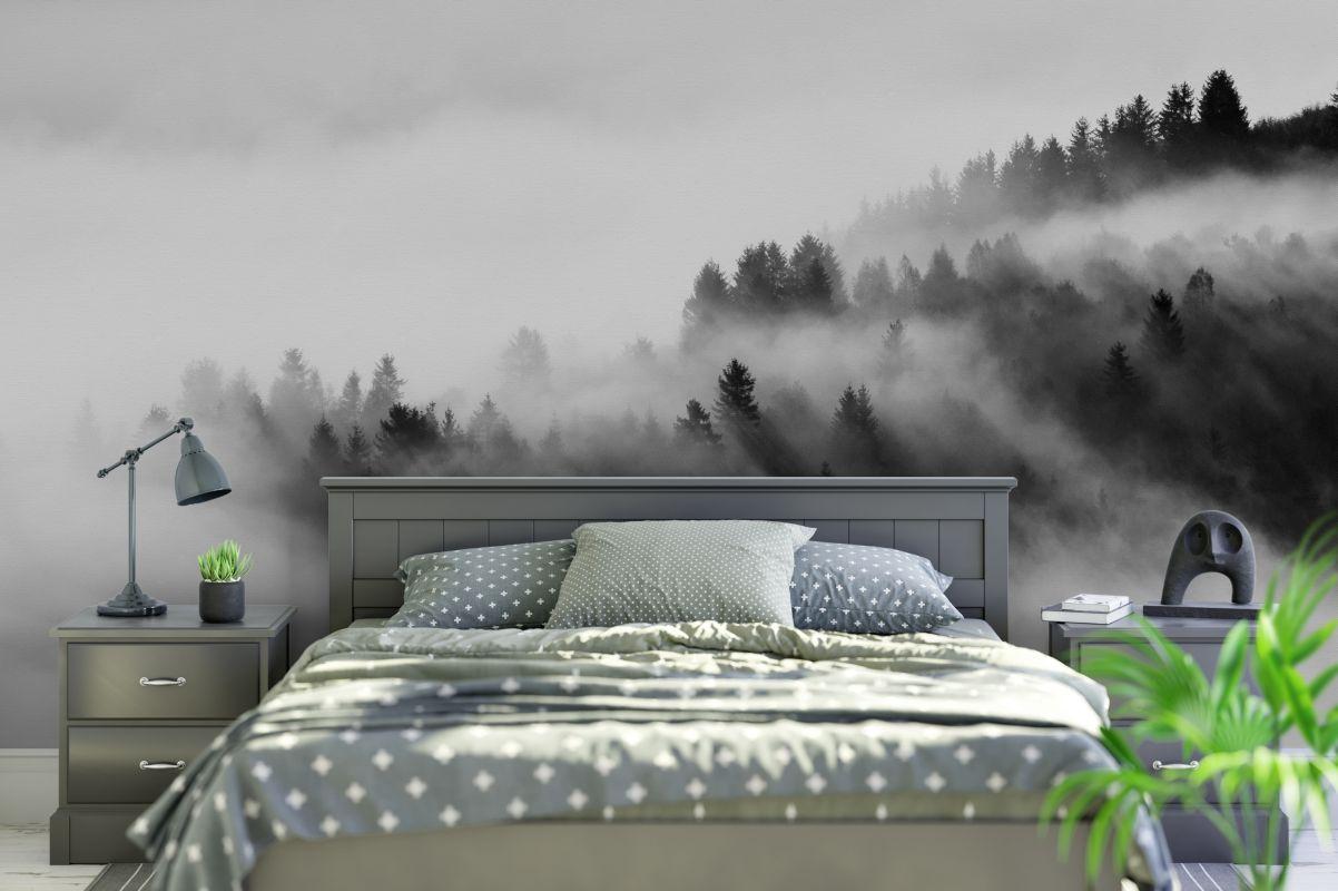 Fototapeta - Świerki wyrastające z mgły - fototapeta.shop