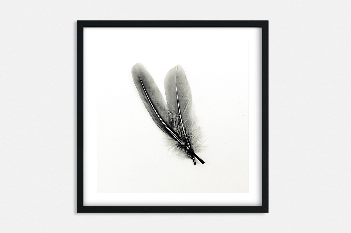 Plakat - Dwa pióra - fototapeta.shop