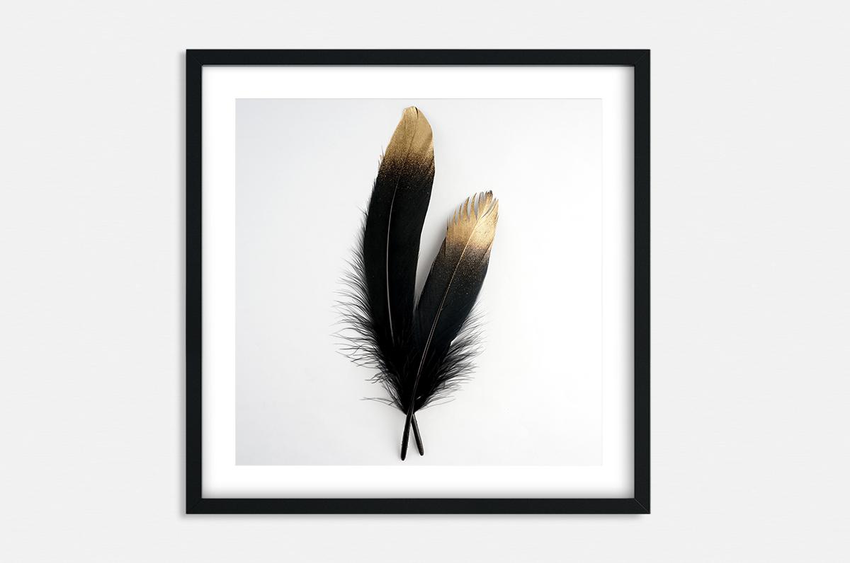 Plakat - Dwa czarne pióra - fototapeta.shop