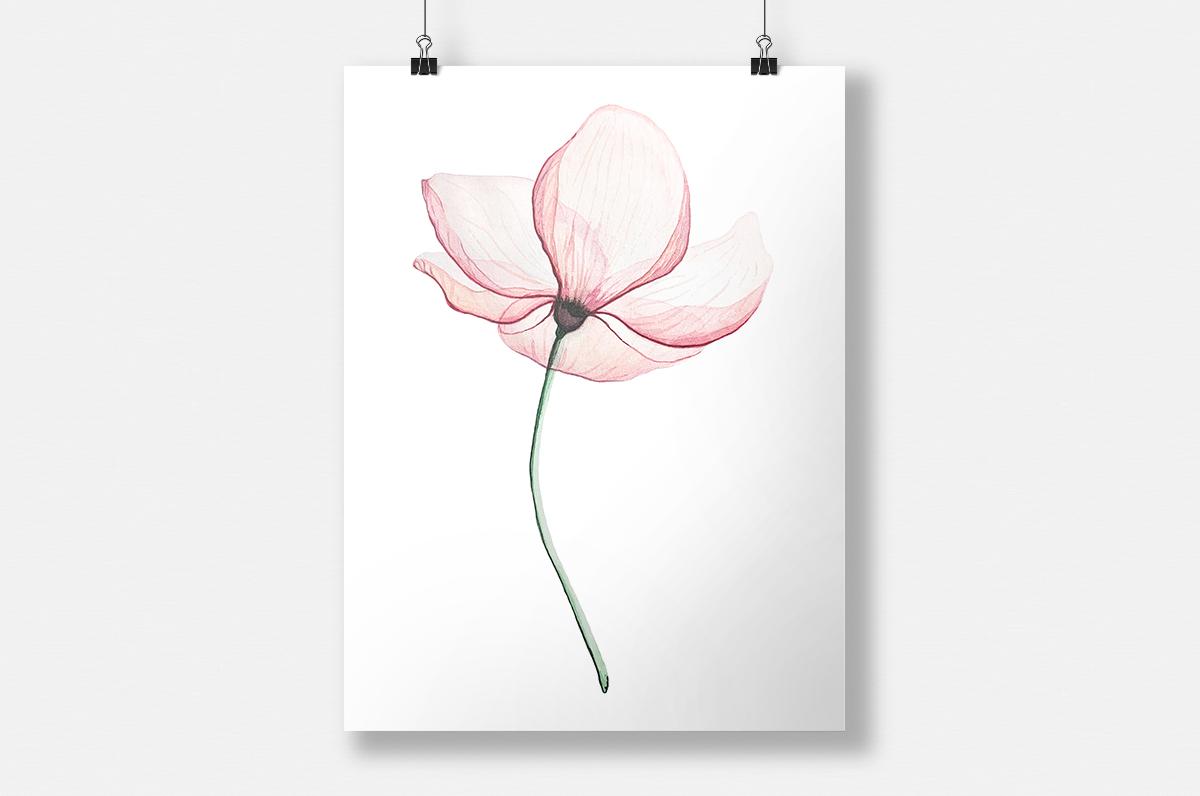 Plakat - Delikatny kwiat - fototapeta.shop