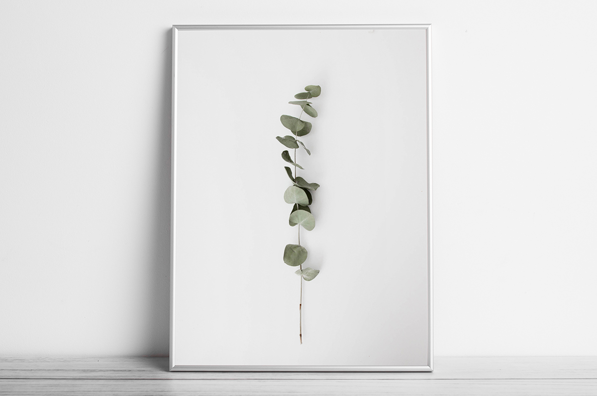 Plakat - Gałązka eukaliptusa - fototapeta.shop
